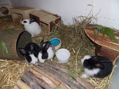 kaninchenzusammen